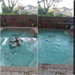 ool cleaning before and after picture